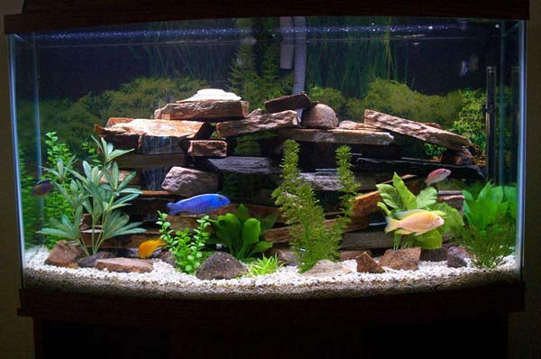 Home service hassle free fish tanks for Fish tank service
